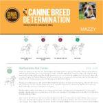 Un estratto di un esempio di referto del test di determinazione della razza DNA My Dog